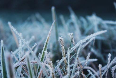 Przygotuj trawnik na zimę – krok po kroku