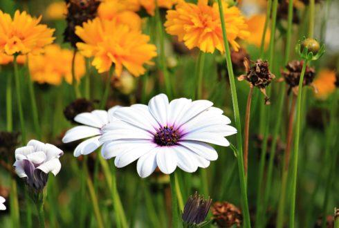 Rabaty kwiatowe wokół tarasu i w ogrodzie