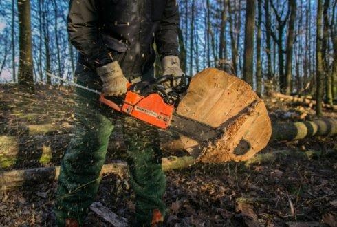 Wycinka drzew – pozwolenia, aktualne przepisy