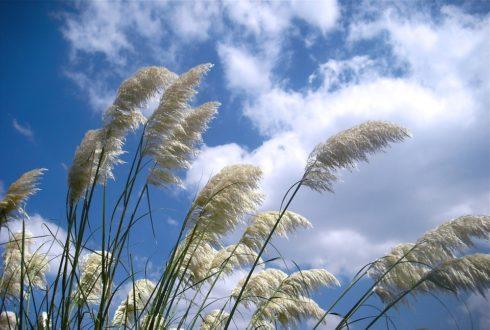 Jak zadbać o czyste powietrze w domu?