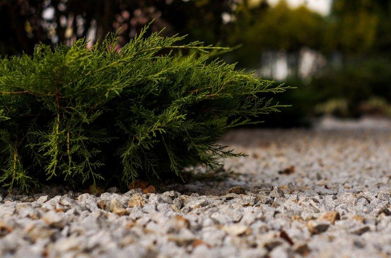 Zalety i wady kamieni w ogrodzie