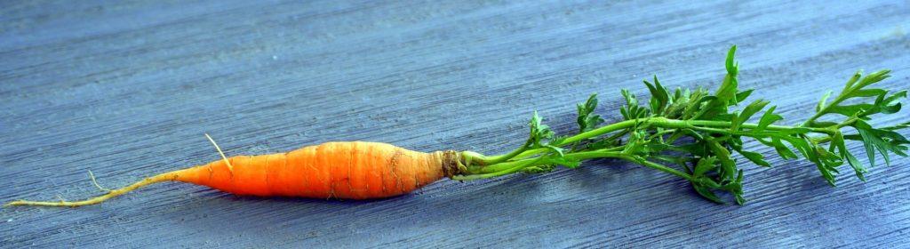 Choroby grzybowe warzyw